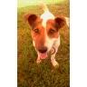 ГОША наш кайтовый пес - самая позитивная собака на свете!